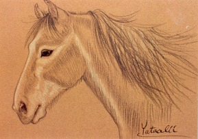prismacolor horse portrait: young grey mustang