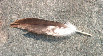 eagle feather, Big Indian Island, Susquehanna River